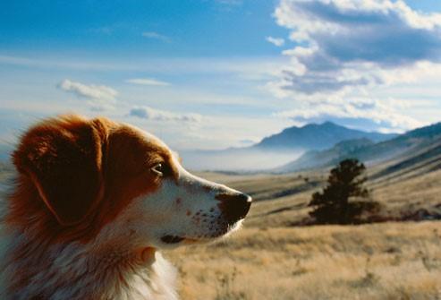 chien de profil qui admire un superbe paysage de steppes et de montages