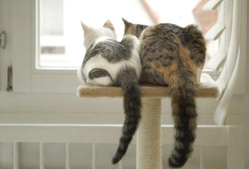 deux chats côté à côté sur un arbre à chat